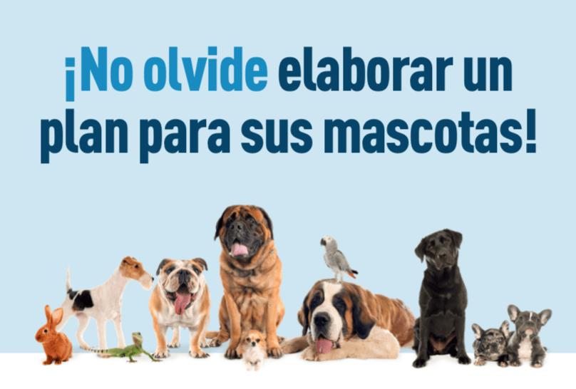 Imágenes de mascotas incluyendo perros, un conejo, un lagarto y un ave