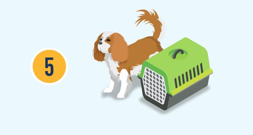 數字五和一隻狗與提箱的插圖。