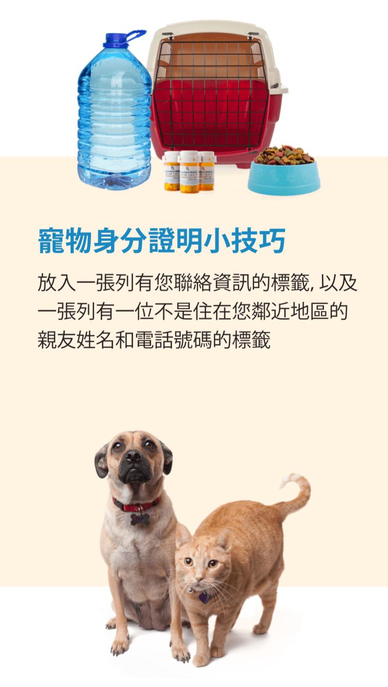 包含水、藥品、食物和提箱等項目的寵物緊急用品包圖片。